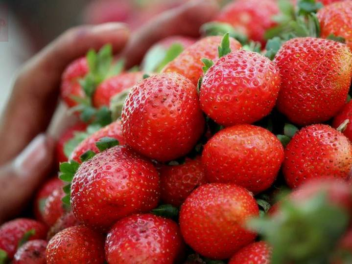 Strawberries for sale. Wikimedia Commons, image by taurn.real