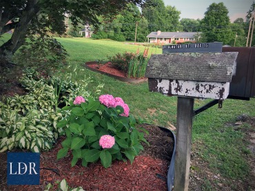 Hydrangea and hostas thrive under the Japanese maple by Dr. Almatari's driveway mailbox.